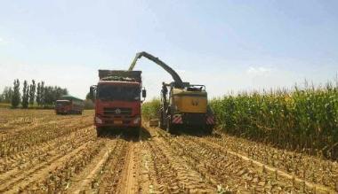ballbet体育APP西甲保护性耕作农田出苗率在95%以上